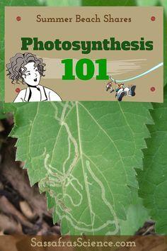 Photosynthesis 101 by Summer Beach | Sassafras Science