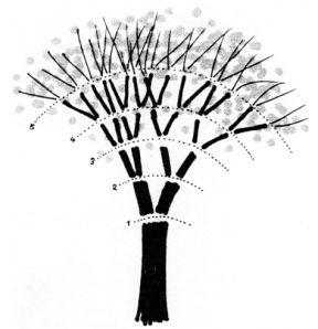 l'albero e la regola del 2