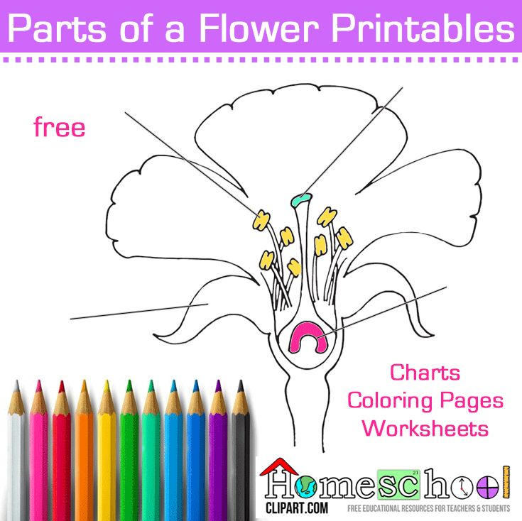 Use for Spring Science Lab. Parts of a Flower Color and
