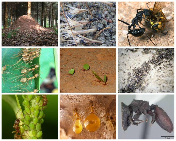 Развивающее занятие-ответ на детский вопрос о муравьях. Изучаем виды муравьев, делаем поделку, учим части тела и играем в игру на развитие моторики