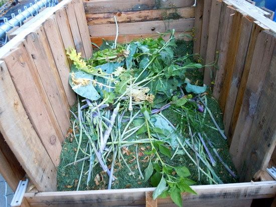 Perfect 17 Best Images About Organic Gardening On Garden