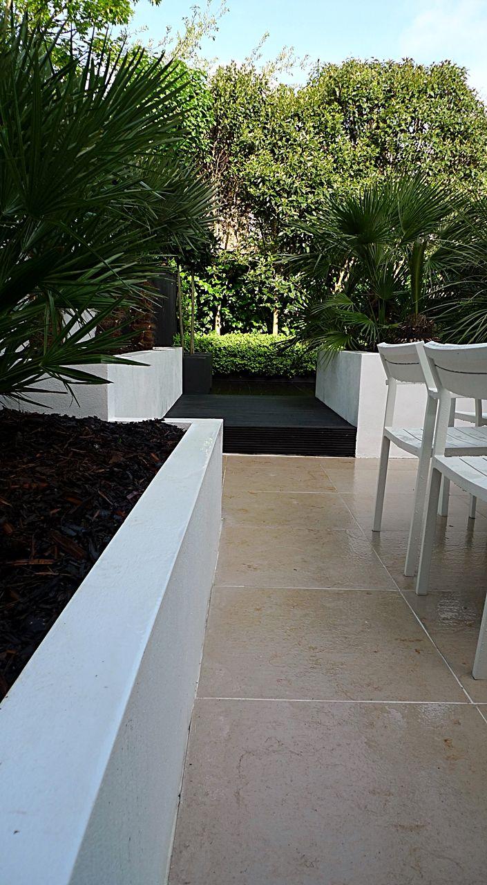 Planting buxus topiary Limestone paving low maintenance privacy scren decking black raised beds London Fulham Chelsea Kensington