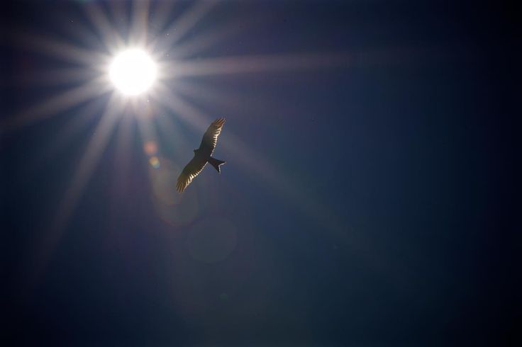 Flugwetter II . . . #light #outdoors #bird #flight #wildlife #birds #sunlight # flare #nikon #milan #switzerland