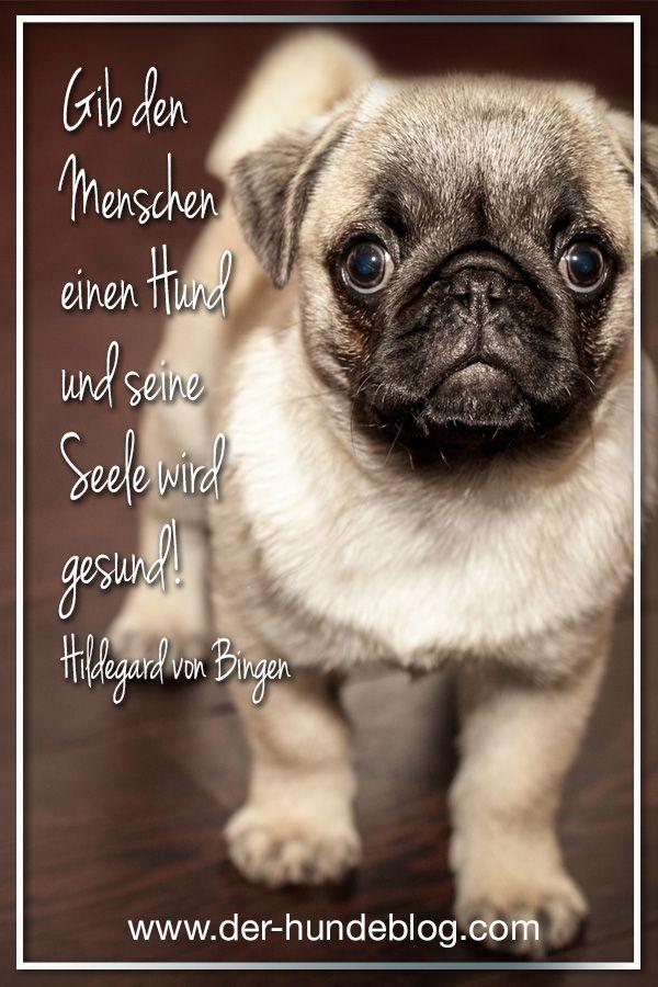 Tolle neue Sprüche und Zitate über und mit Hunden. Schaut auf dem