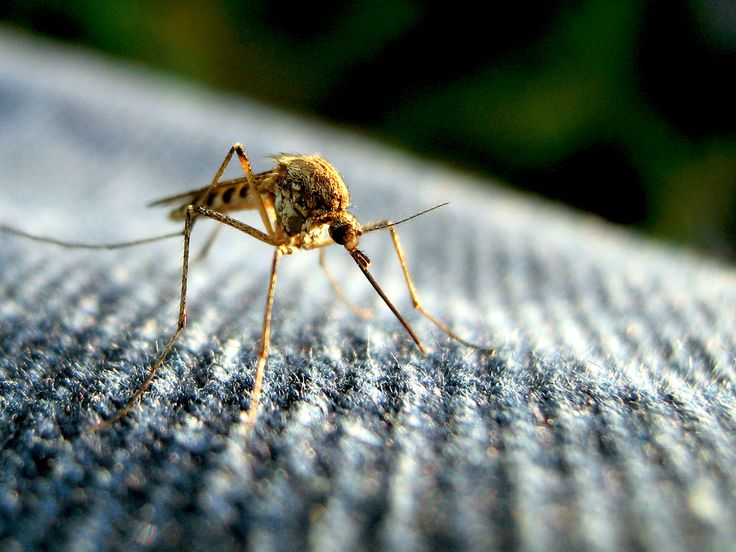 Guest Post: Mosquito Protection for Backpackers and Campers