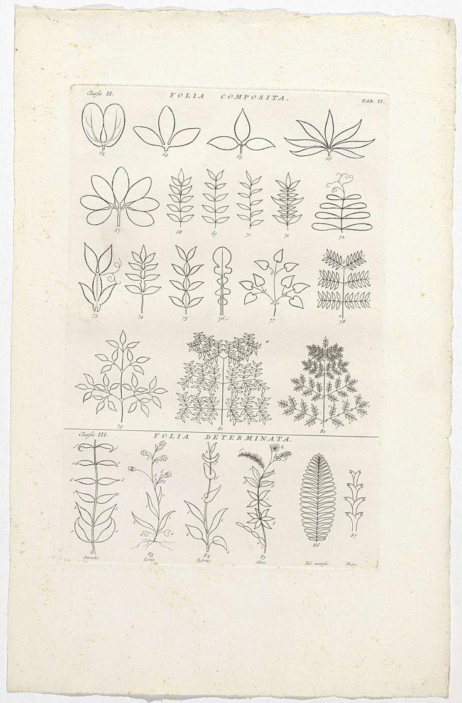 Blad met omtrek van 25 bladeren van verschillende planten, Jan Wandelaar, 1738