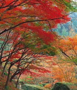 Luces de otoño en Japon