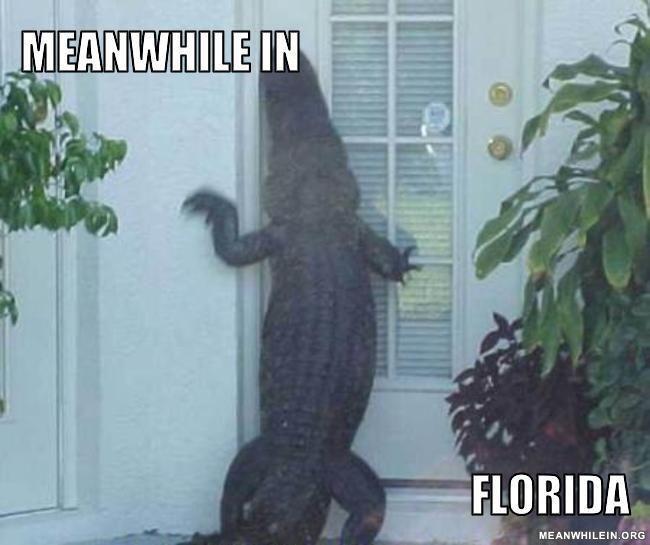 Meanwhile In Florida Alligator Internet Meme