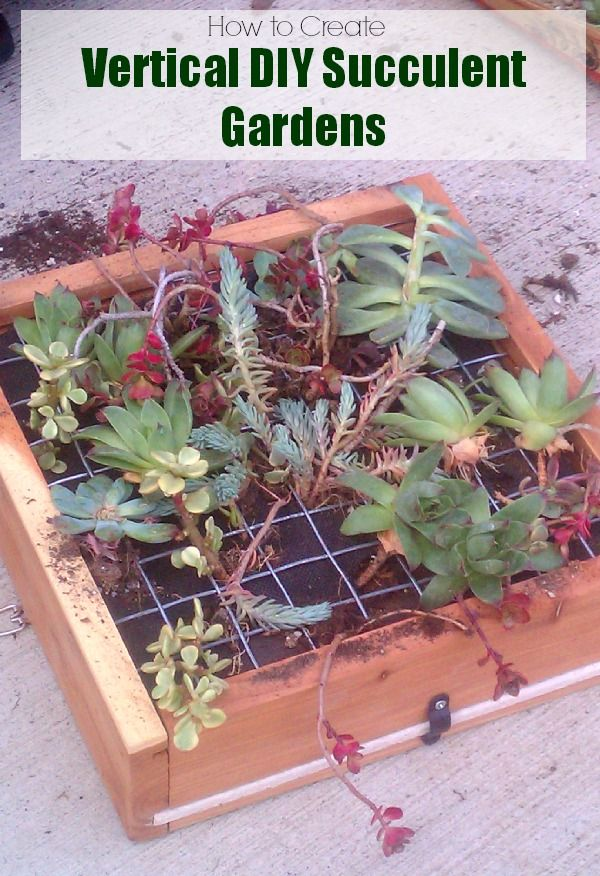 DIY Succulent Gardens: Learn How To Make Vertical Hanging Succulent Gardens
