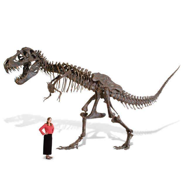 This life-size T-rex skeleton.