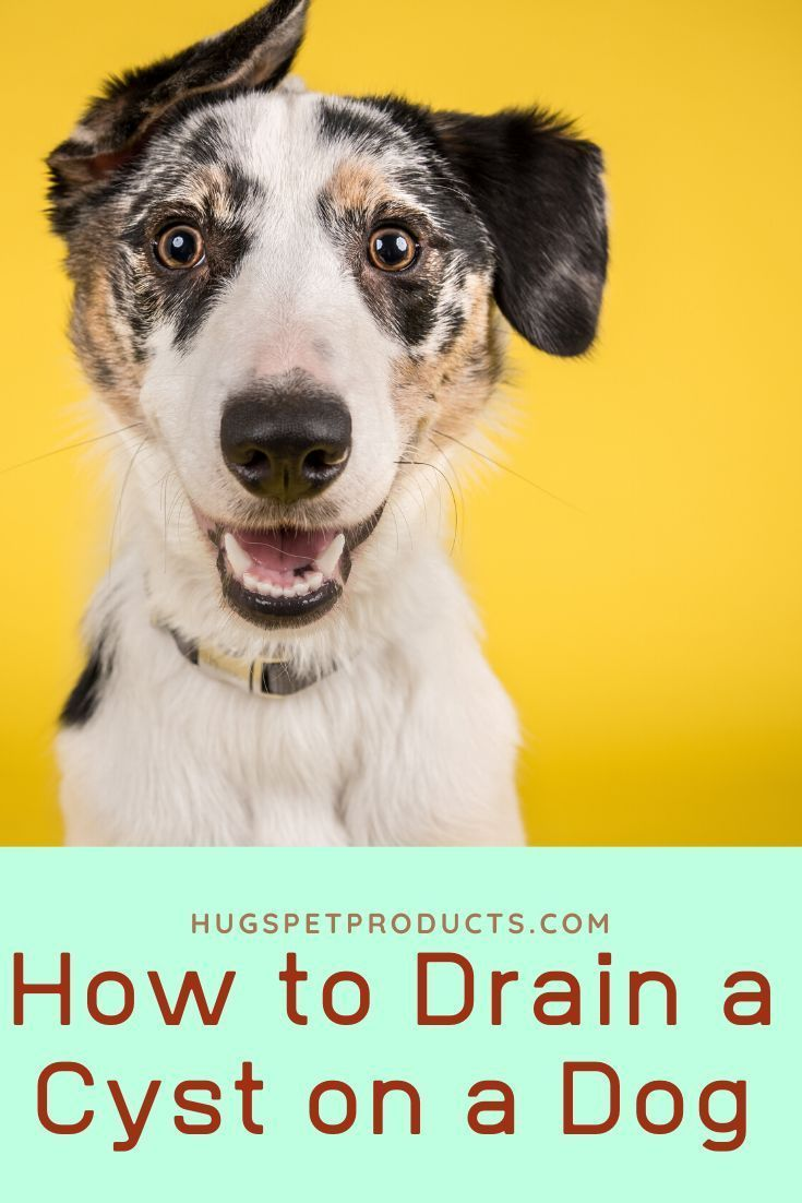 How To Drain A Cyst On A Dog Dog Names Dogs Cool Pet Names