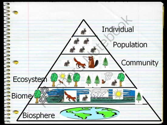 This is an ecological pyramid. It has six parts that make up ecology. Many schools teach this because the 6 parts are important to know.
