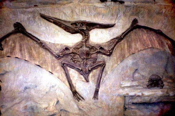 Pterodactyl fossil. Have you ever really wondered in what way an extinct animal or bird is a proof of evolution? What about those who didn't go extinct and still roam the Earth today essentially unchanged?