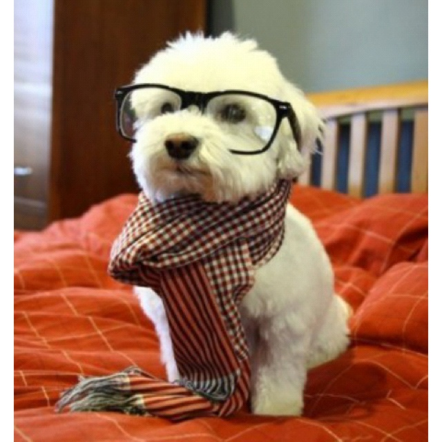 So smart...: Animals, Dogs, Hipster Puppy, Pet, Puppys, Funny, Things, Hipsterdog