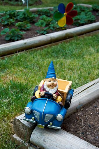 Driving around the garden gnome...