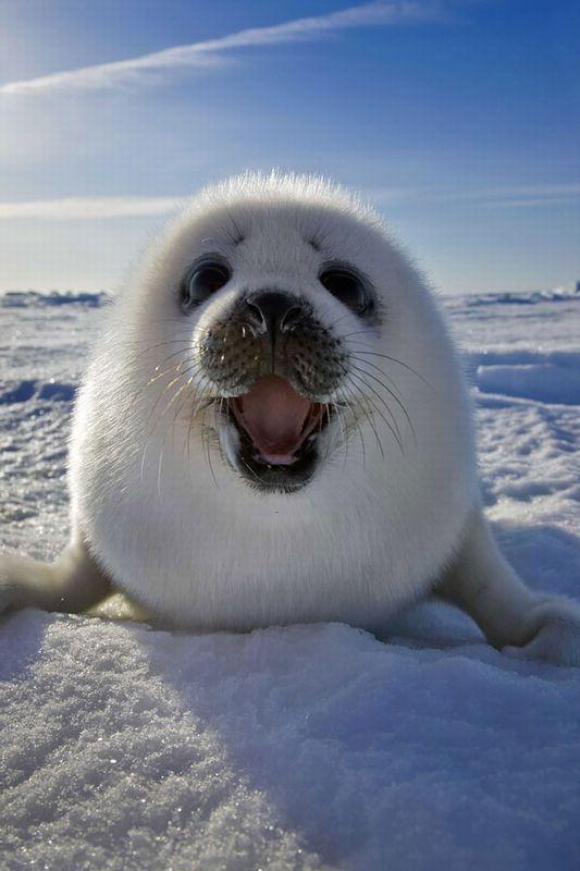 Happy cute seal pup
