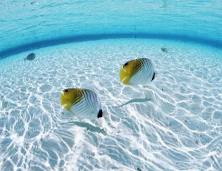 Two fish in clear water,circular.