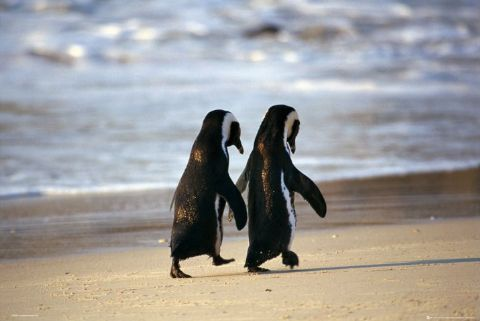 This is a 'must have' for the gallery wall. We had this image on our wedding invitations. Obsessed with penguins :)