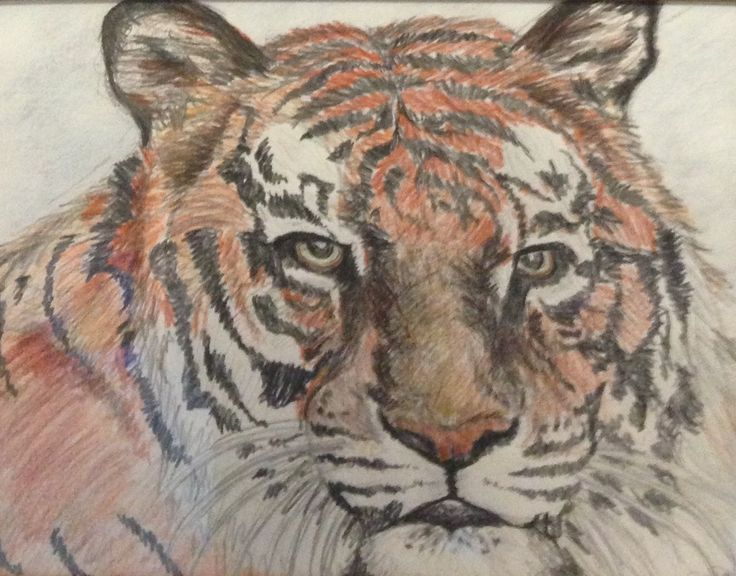 Pencil Crayon Tiger