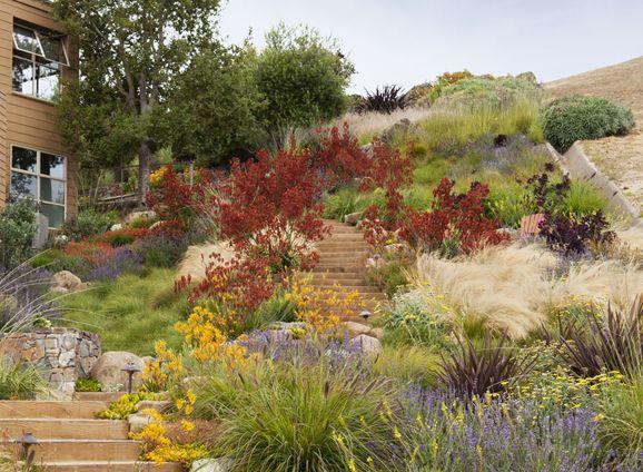 Graminées et vivaces en mélange à flanc de talus -Tiburon Hillside | Arterra Landscape Architects