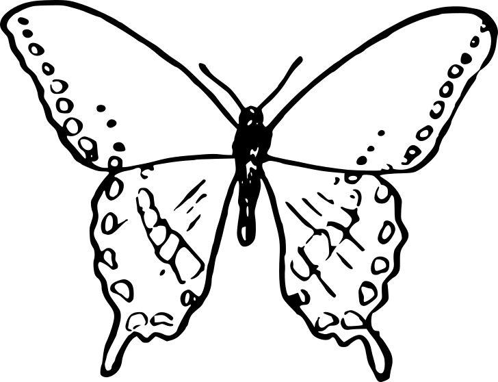 Obrázek k tisku pro děti k vybarvení a vytištění, omalovánka k vytisknutí Motýlek