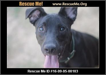 UPDATE:  11/18/2016  Joseph is still available for adoption.  ― Tennessee Dog Rescue ― ADOPTIONS ―RescueMe.Org Lab mix puppy named Joseph in danger of euthanasia if not adopted soon.
