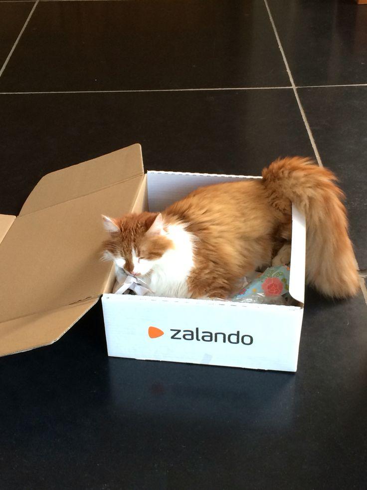 ergens speciaal liggen doe je altijd maar dan ook altijd maar vandaag wou je in een doos liggen van zalando en gelukkig hebben we je niet terug gezonden