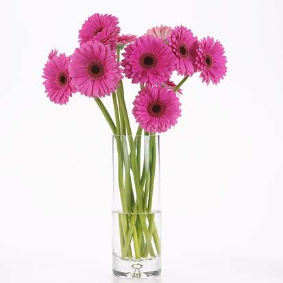 Gerbera Daisies are my fave!  <3