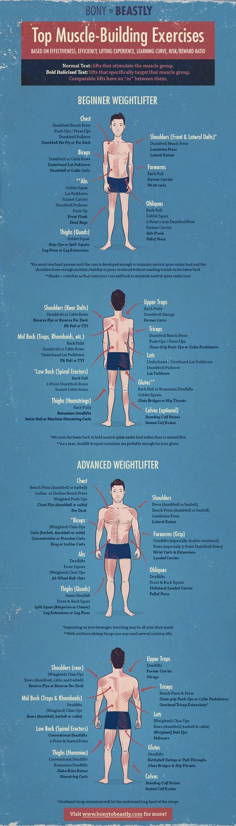 The best exercises for building muscle broken down by muscle group.