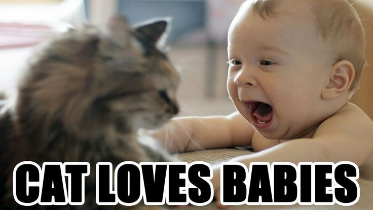 Funny Cat Meet Baby For The First Time - Video HD