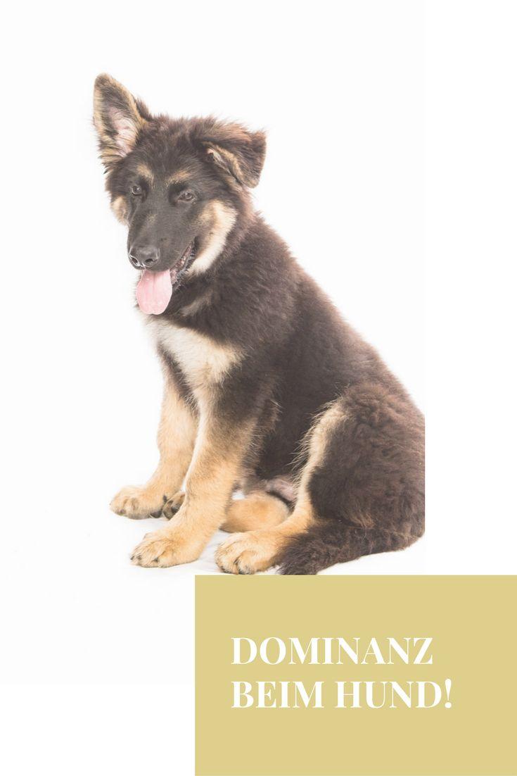 Dominante Hunde... gibt es sie wirklich?