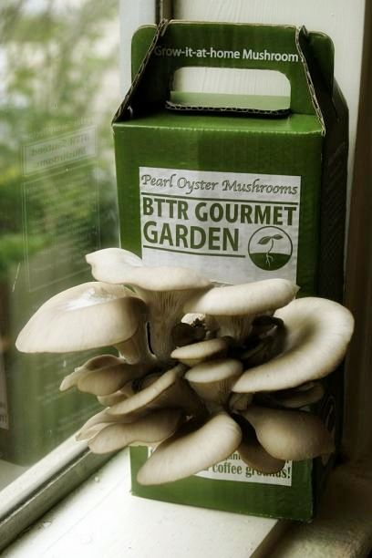 Easy-to-Grow Mushroom Garden: Homegrown Mushrooms, Gardens Kits, Easytogrow Mushrooms, Mushrooms Gardens, Coffee Ground, Mushrooms Kits, Easy To Growing Mushrooms, Mushrooms Easy, The Roots