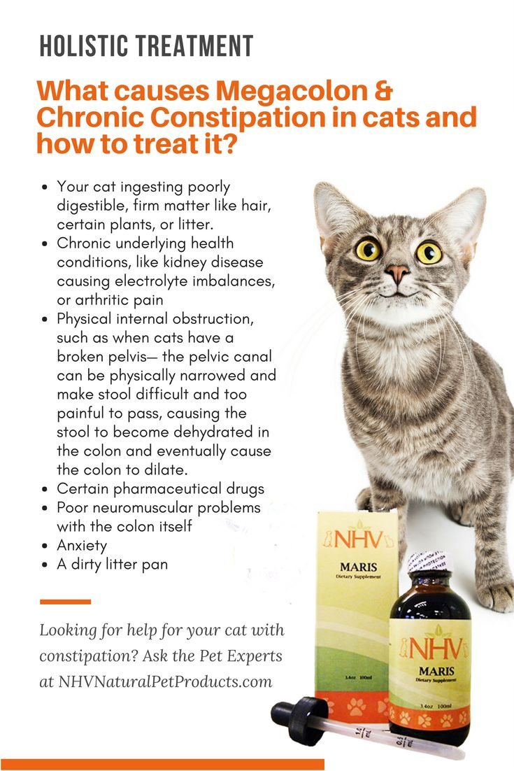 Natural Remedies For Cat Constipation
