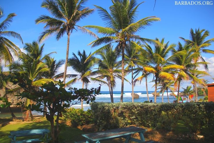 Bathsheba Park, one of our favourite picnic spots on the island.