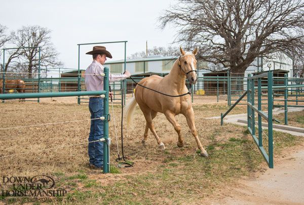 Downunder Horsemanship | Training Tip: Does Your Horse Have a Phobia of Gates?