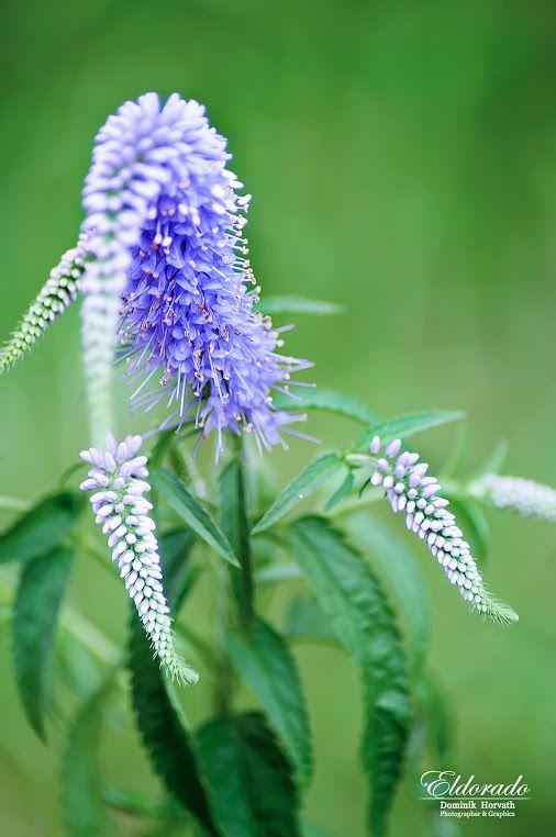 V zahradě .. / In the Garden .. #eldoradothemeart  #flowers +HQSP…