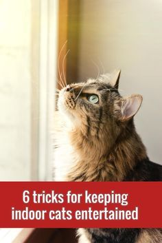 Stave off boredom & obesity in your indoor cat with these 6 simple tricks