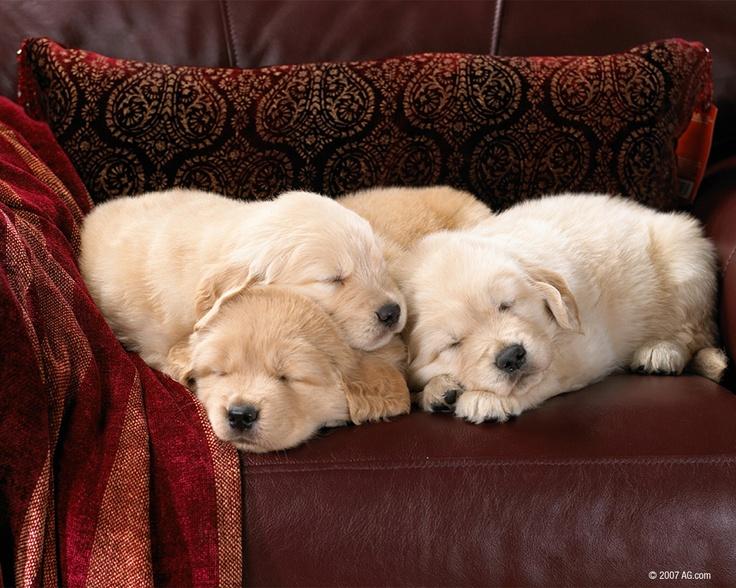 Cuddling Puppies