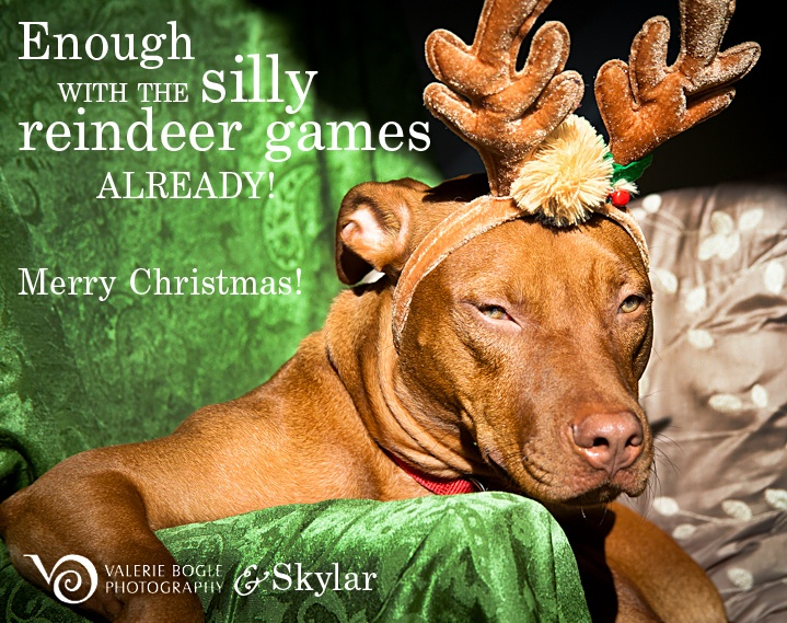 Merry Christmas!  PORTRAITS: CHILDREN, FAMILY & PETS | Photography
