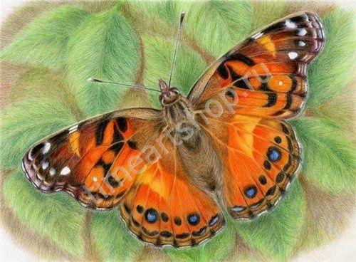 Бабочка Крапивница, картина раскраска по номерам своими руками, размер 40*50 см, цена 750 руб
