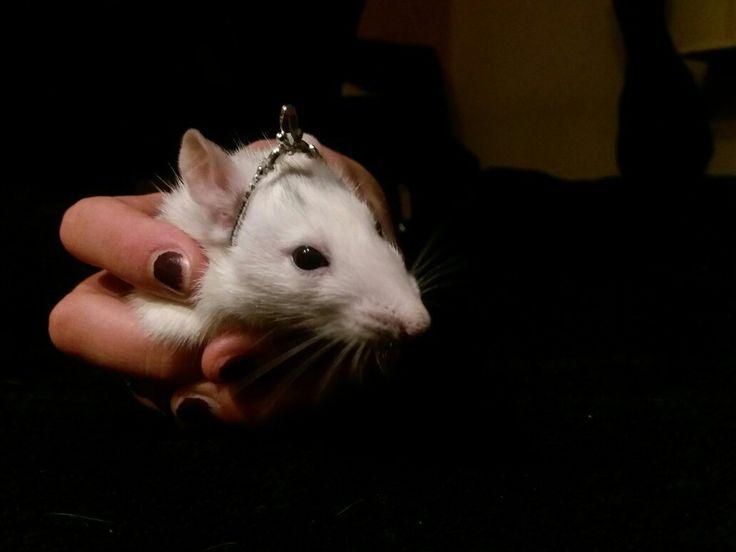 My princess Zoe