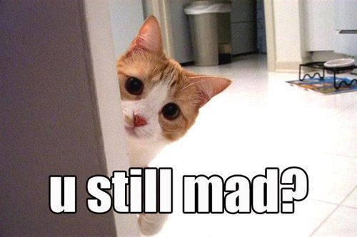 U still mad?: Cats, Face, Animals, Mad, Funny Stuff, Humor, Funny Animal, Kitty
