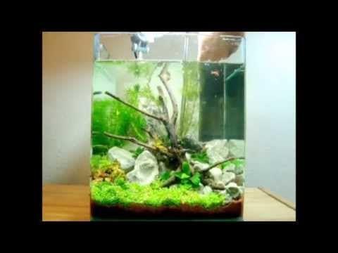 20L Dennerle Nano-Cube Einrichten - 5 Gallon nano tank set up - YouTube