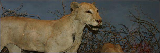 Tsavo Man Eater