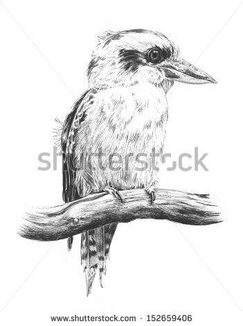 Hand Drawn Sketch Of Australian Kingfisher Or Laughing Kookaburra ...
