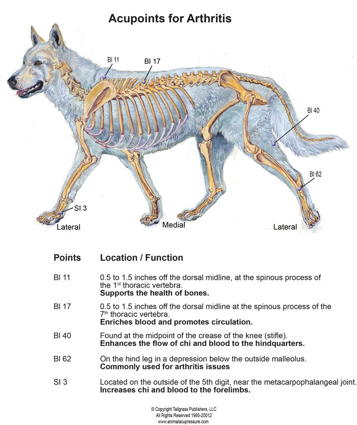 Acupressure Points For Canine Osteoarthritis | Animal Wellness Guide