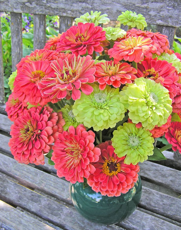 zinnia bouquets | LOVE this color combo! Zinnia 'Decor'