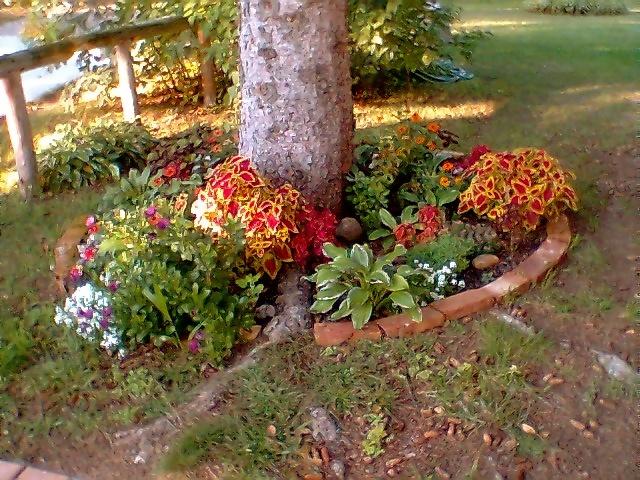 Flower Garden Ideas For Around Trees 18 best around the tree garden ideas images on pinterest | flower