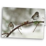 Adorable, chubby little winter birds on a thorny vine. Very sweet - and room for logo top left or bottom right.