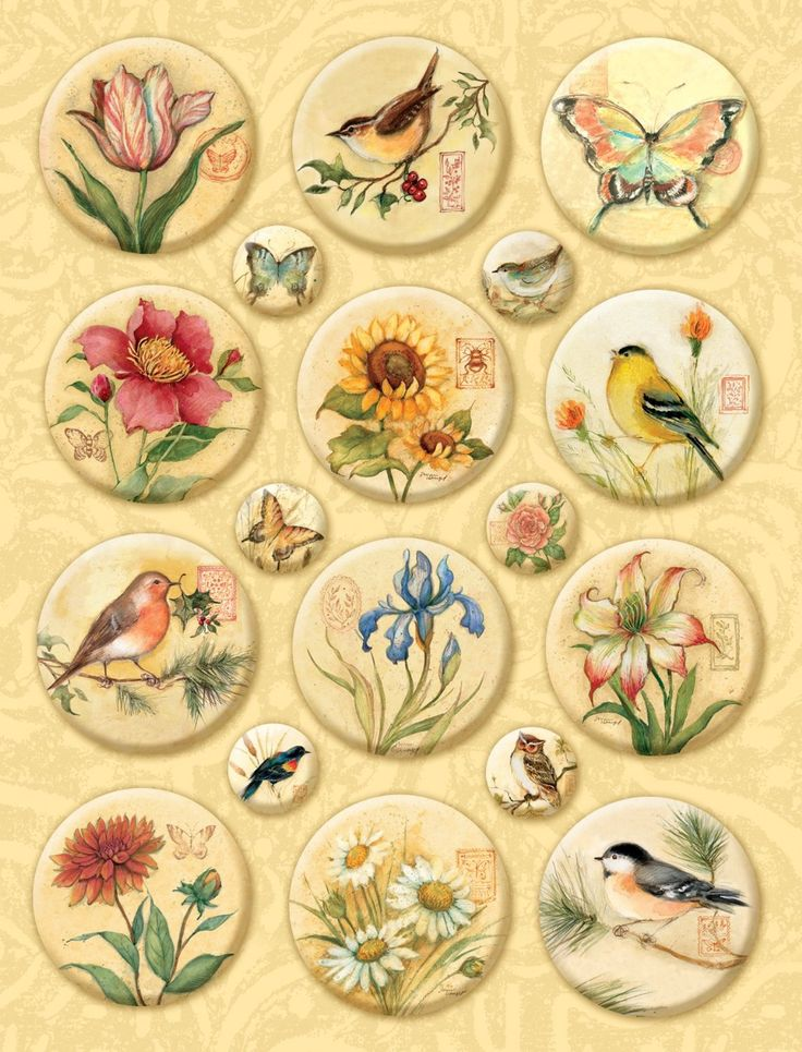 Amazon.com: K&Company Susan Winget Nature Icon Clearly Yours Embellishments: Arts, Crafts & Sewing